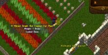 Ultima Online: A Day In The Life of One PC Screenshot